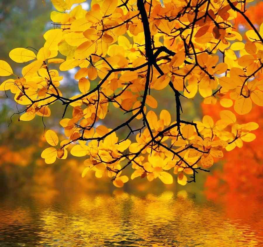 چگونه از زیبایی های فصل پاییز عکس بگیریم؟