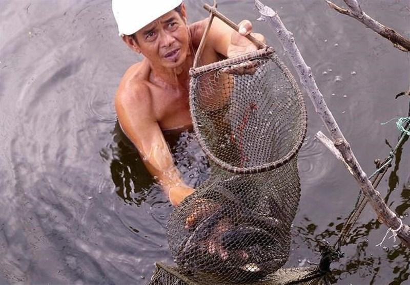 سالانه 20 هزار نفر به دلیل مصرف نوعی ماهی در تایلند می میرند
